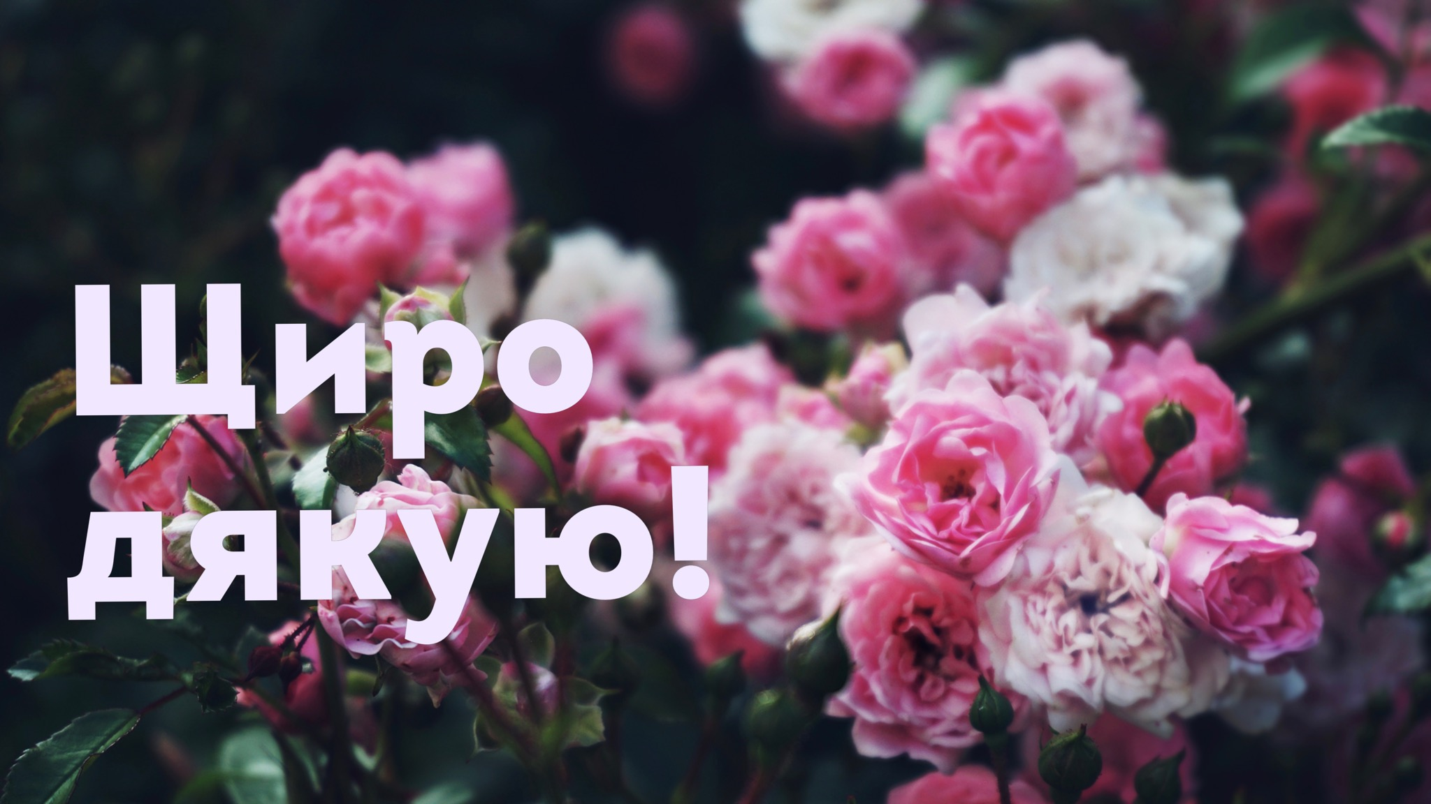 how to say thank you in Ukrainian