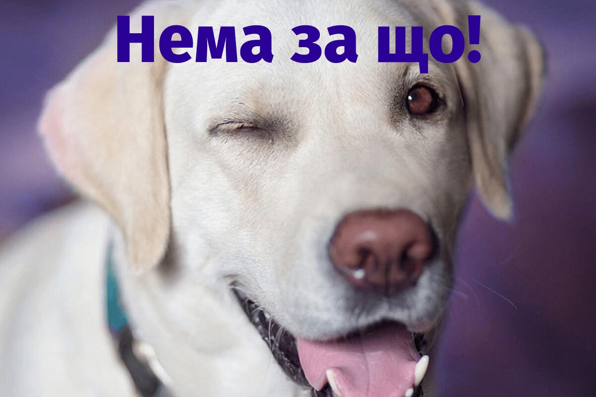 respond to дякую in Ukrainian