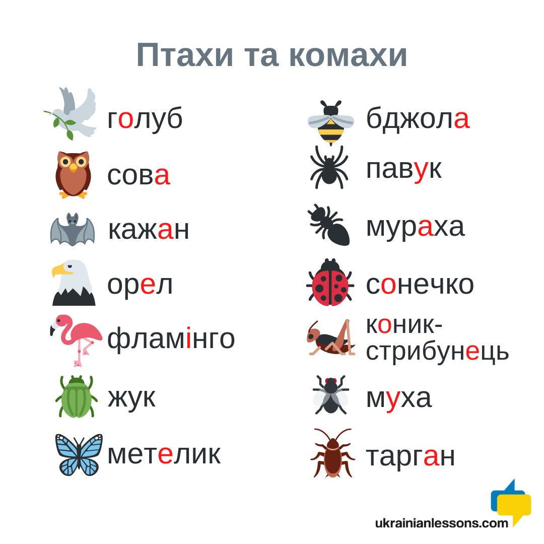 birds and insects in Ukrainian
